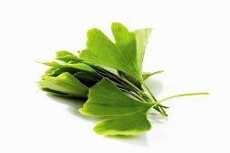 Fresh ginkgo leaves