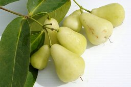 Green Java apples with branch