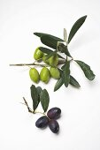 Olive sprigs with green and black olives