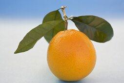 Orange with leaves on light blue background