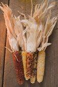 Cobs of corn (Autumn decoration, USA)