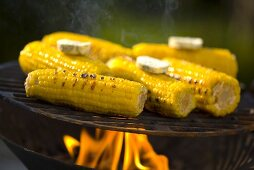 Corn on the cob with herb butter on barbecue