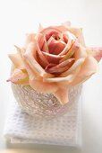 Pink rose in windlight on white towel