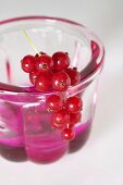 Jelly in small jelly mould with redcurrants