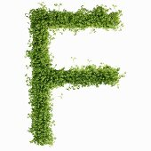 The letter F in cress