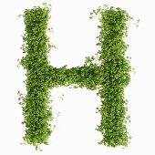 The letter H in cress