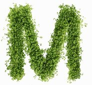 The letter M in cress