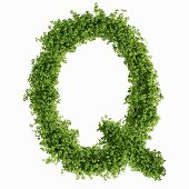 The letter Q in cress