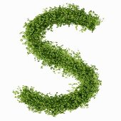 The letter S in cress