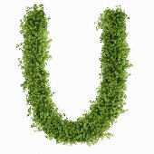 The letter U in cress