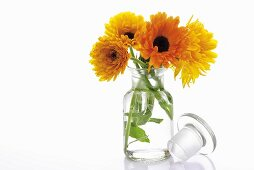 Marigolds in apothecary jar