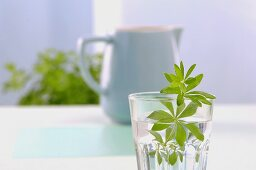 Woodruff in glass of water, tea pot in background
