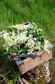 A crate of elderflowers