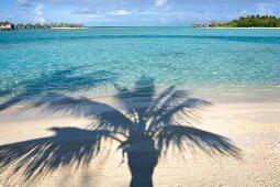 View of palm tree shadow on Veligandu Huraa, Maldives