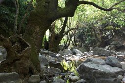 Forest with rocks in Edremit, Balikesir Province, Turkey