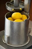 Menton lemons in a press