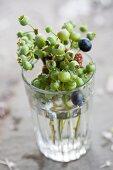 Unripe blueberries in water glass