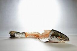 Salmon carcass