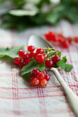 Redcurrants on a spoon