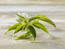 Nettles on wooden table