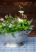 Green herbs and coriander flowers in old metal colander on blue gingham tablecloth