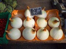 Große Zwiebeln, Carouge Markt, Genf, Schweiz