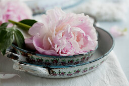 Pink peony and casserole dishes