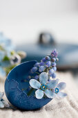 A blue dyed eggshell filled with grape hyacinths and scilla