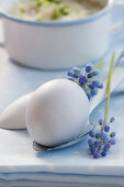A boiled egg on an enamel spoon with grape hyacinths