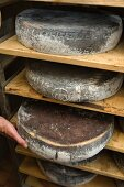 South Tyrolean cheese (grey looking Ciampedello and a name)