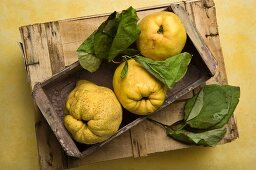 Three quinces in a wooden crate