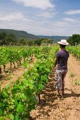 Vines being covered with nets, Clos d Agon winery, Calonge, Spain