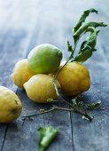 Lemons on a sprig