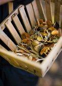 Fresh picked mushrooms in a basket