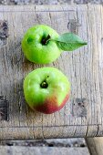 Two Ontario apples (winter apples)