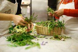 Women sorting various herbs in kitchen