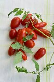 Plum tomatoes and tomato leaves