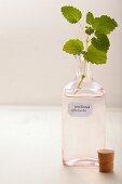 Lemon balm in an apothecary bottle