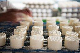 Handmade sheep's cheese made of raw milk (Portugal)