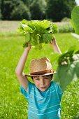 A boy in a garden holding a lettuce above his head