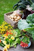 Freshly harvested organic vegetables, nasturtiums and wild strawberries in a garden