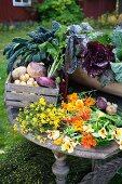 Freshly harvested organic vegetables and nasturtiums in a garden