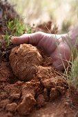 A hand demonstrating a Kalahari truffle in the desert