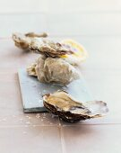 Oysters with salt flakes
