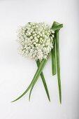 An onion flower onion greens (Allium cepa)