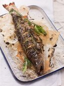 Oven-roasted char on a piece of baking paper