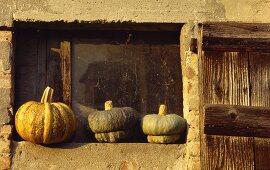 Three squash fruits from Mantua (zucca mantovana)