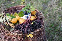 A still life featuring elderberries and pears