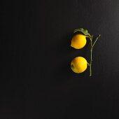 Zwei Zitronen am Stiel mit Blatt