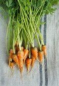 Baby carrots on a tea towel